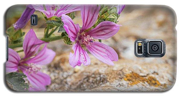 Malva Sylvestris - Spontaneous Flower Of The Tuscan Mountains Galaxy S5 Case