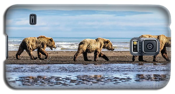 Mama Bear And Her Two Cubs On The Beach. Galaxy S5 Case