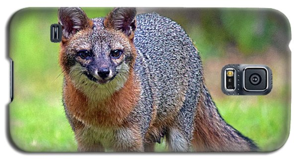 Mama Fox Galaxy S5 Case