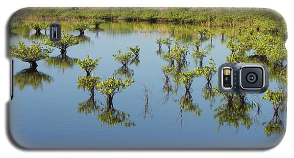 Mangrove Nursery Galaxy S5 Case