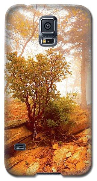 Manzanita In Light Galaxy S5 Case