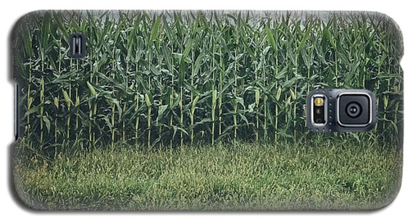 Maize Field Galaxy S5 Case