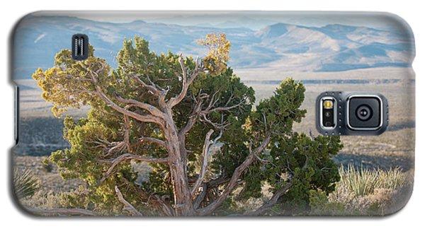Mesquite In Nevada Desert Galaxy S5 Case