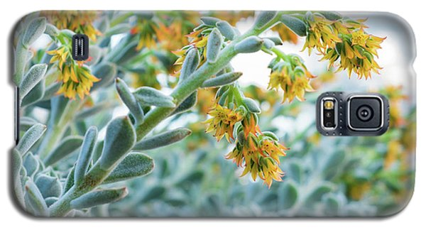 Mexican Echeveria In The  Morning Galaxy S5 Case