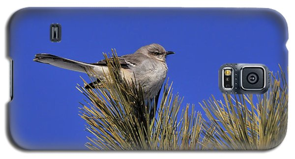 Mockingbird In White Pine Galaxy S5 Case