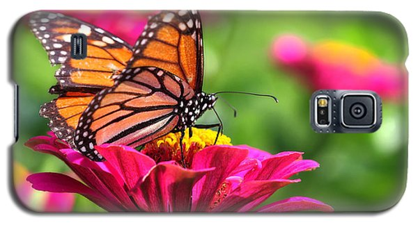 Monarch Visiting Zinnia Galaxy S5 Case