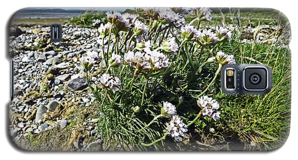 Morecambe. Hest Bank. Sea Thrift. Galaxy S5 Case