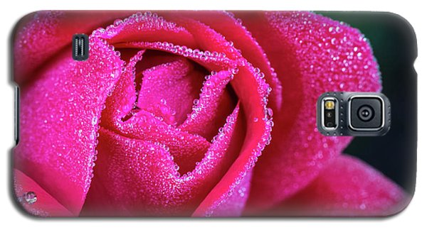 Morning Rose Galaxy S5 Case