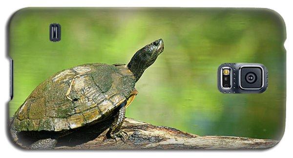 Mossy Turtle Galaxy S5 Case