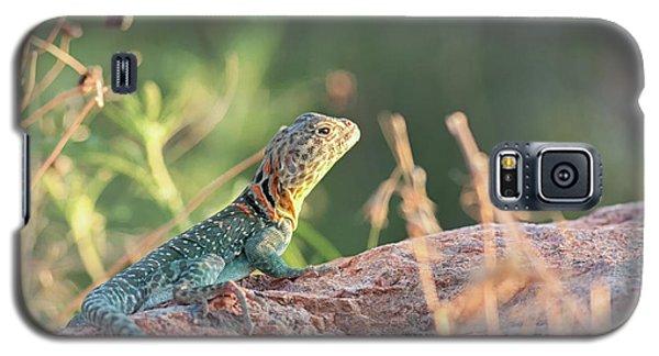 Mountian Boomer Galaxy S5 Case