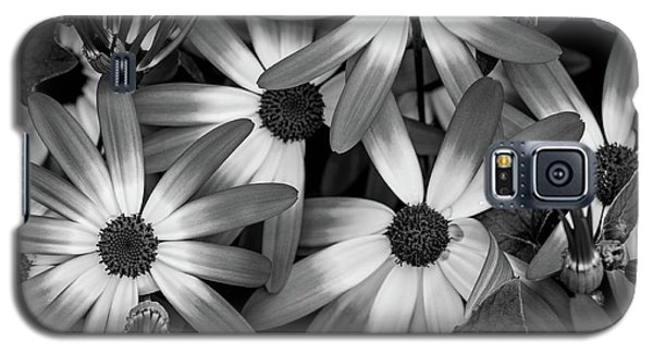 Multiple Daisies Flowers Galaxy S5 Case