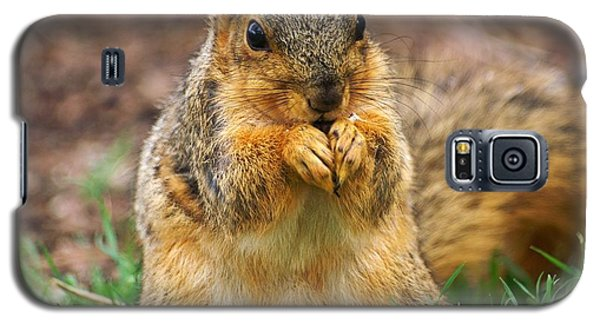 Munching Cute Fox Squirrel Galaxy S5 Case