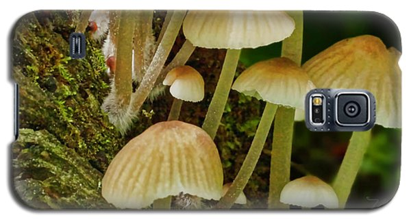 Mushrooms Galaxy S5 Case