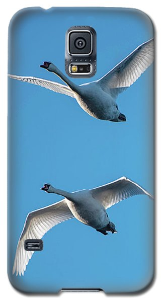 Mute Swans In Flight Galaxy S5 Case