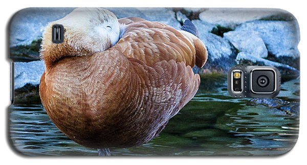 Napping At The Pond Galaxy S5 Case