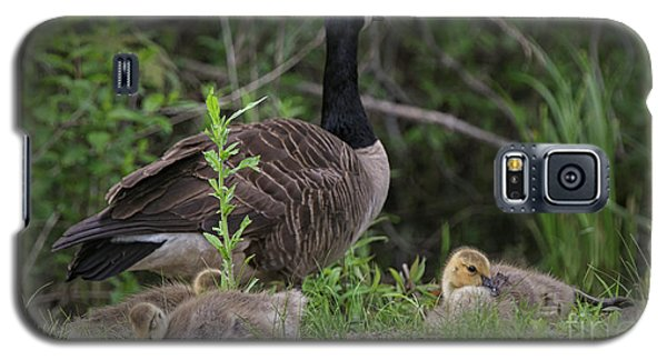 Nature's Gift  Galaxy S5 Case