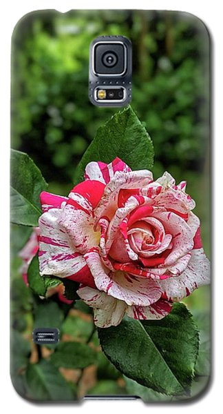 Neil Diamond Rose Galaxy S5 Case