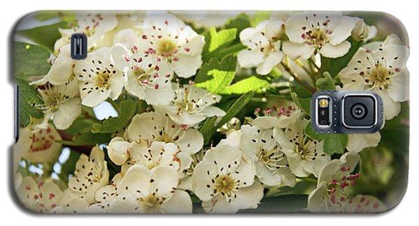 Neston.  Hawthorn Blossom. Galaxy S5 Case