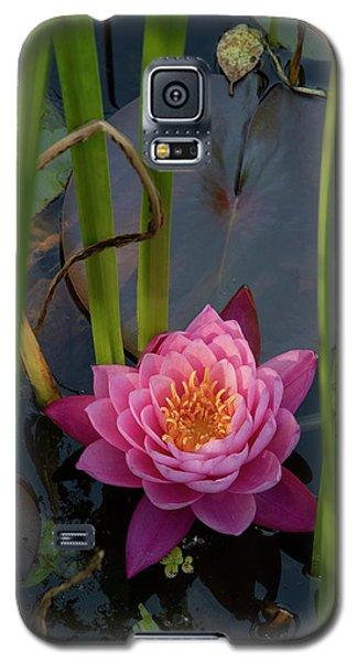 New Hope Galaxy S5 Case