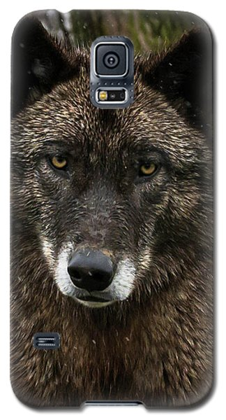 Niko Portrait Galaxy S5 Case