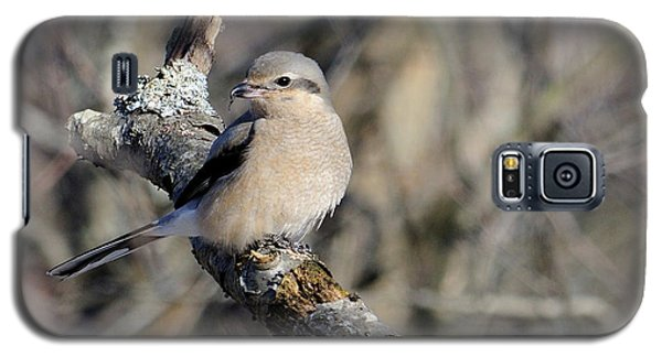 Northern Shrike Galaxy S5 Case