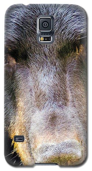 Nosy Bear Galaxy S5 Case