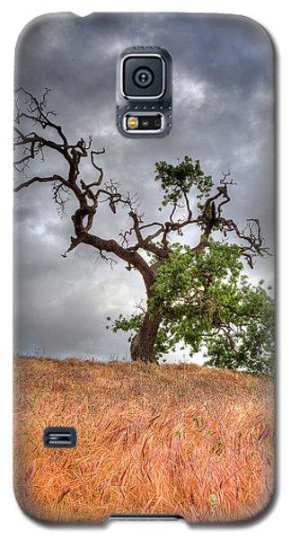 Old Oak Tree Galaxy S5 Case