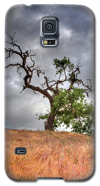 Old Oak Tree Galaxy S5 Case