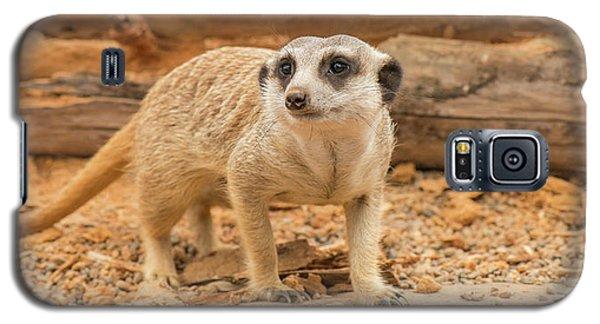 One Meerkat Looking Around. Galaxy S5 Case