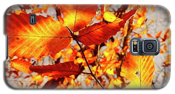 Orange Fall Leaves Galaxy S5 Case