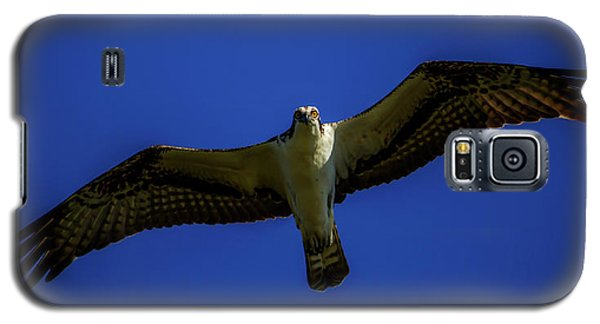Osprey Glide In Blue Galaxy S5 Case