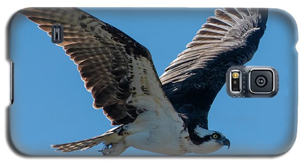 Osprey In Flight Galaxy S5 Case