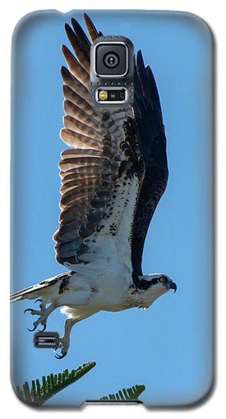 Osprey Taking Flight Galaxy S5 Case