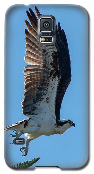 Osprey Taking Flight Galaxy S5 Case