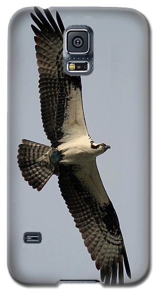 Osprey With Fish Galaxy S5 Case