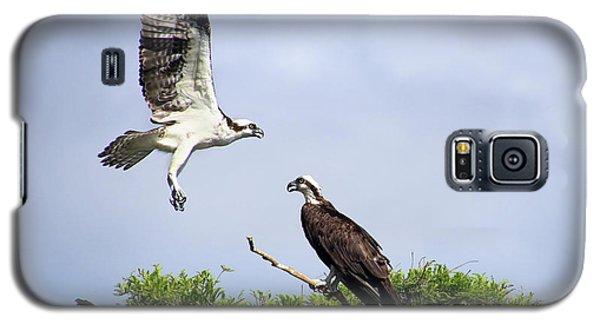 Ospreys At Blue Cypress Lake Galaxy S5 Case