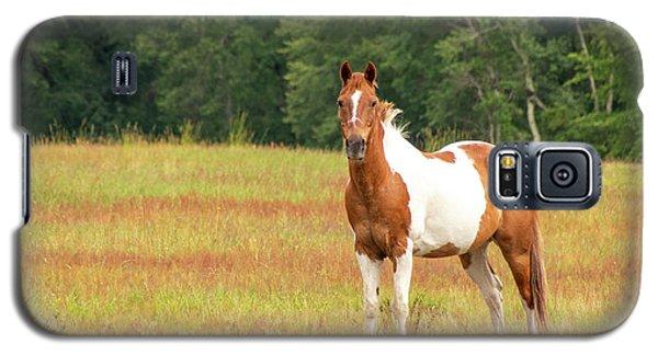 Paint Horse In Meadow Galaxy S5 Case