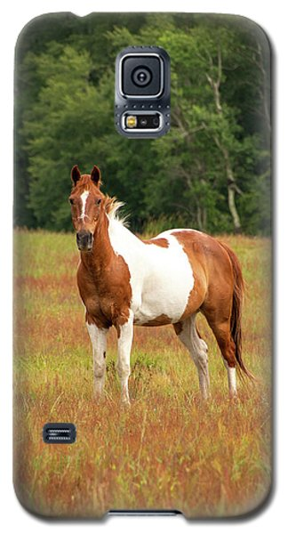 Paint Horse In Pasture Galaxy S5 Case