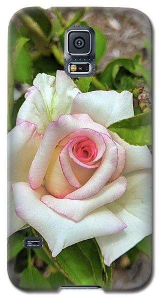 Pale Rose Galaxy S5 Case