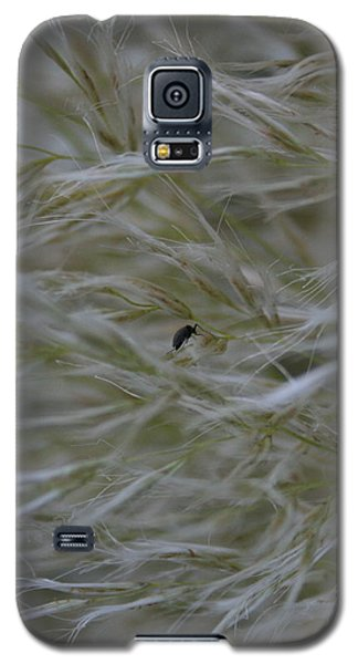 Pampas Grass And Insect Galaxy S5 Case