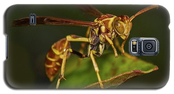 Paper Wasp Galaxy S5 Case