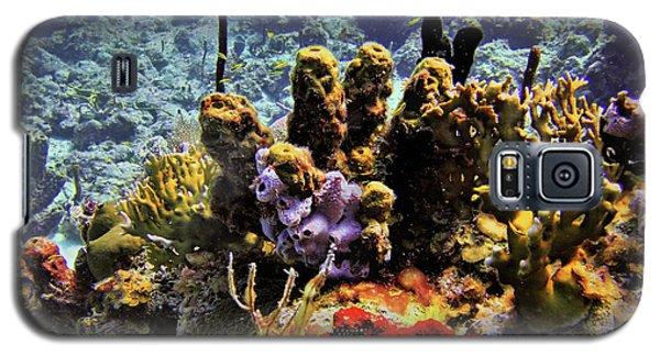 Patch Reef Bluff Galaxy S5 Case
