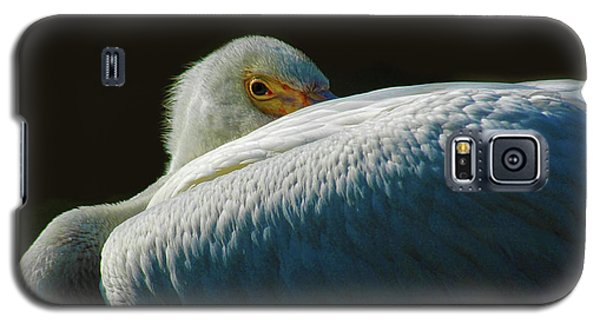 Peeking Galaxy S5 Case