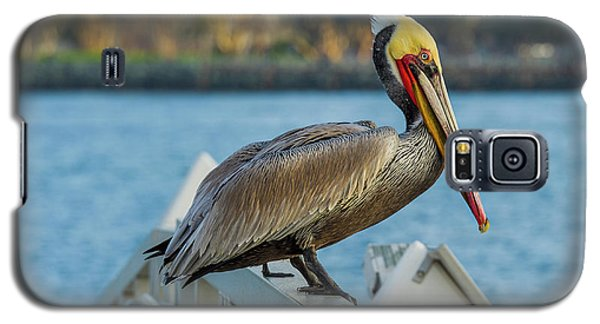 Peli-can Or Can't? Galaxy S5 Case