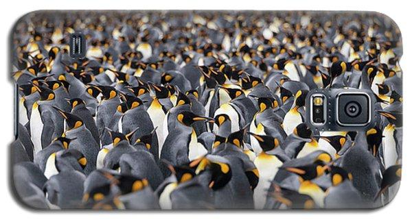 Penguinscape Galaxy S5 Case