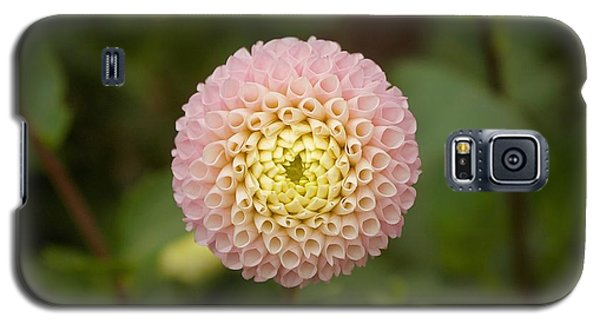 Petite Pink Galaxy S5 Case