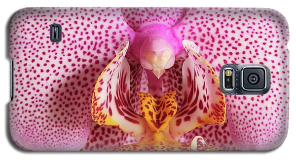 Phalaenopsis Orchid Galaxy S5 Case