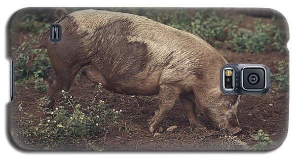 Pig Galaxy S5 Case