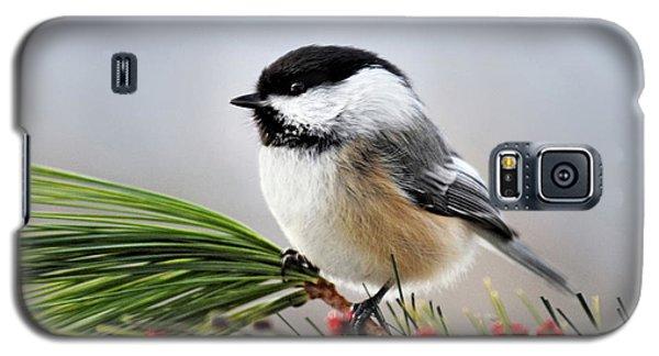 Pine Chickadee Galaxy S5 Case