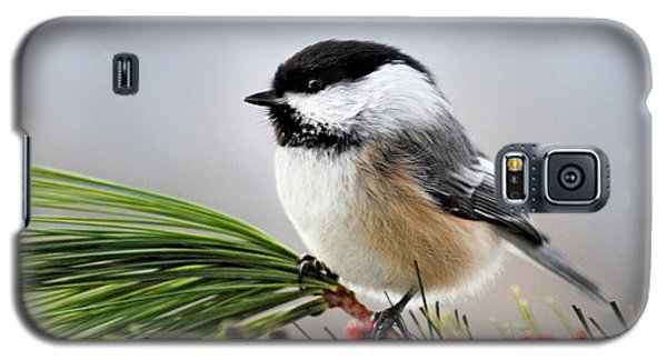 Pine Chickadee Galaxy S5 Case